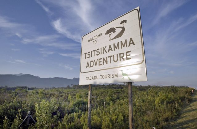 Tsitsikamma's Big Tree back in business as Tourism Dept reopens site