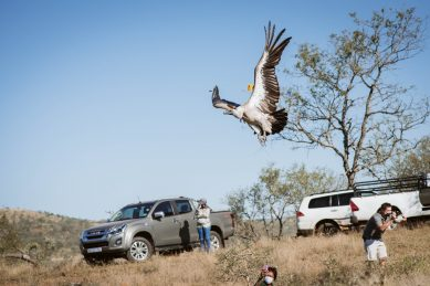 'A vulture crisis could mean a human crisis', wildlife experts warn