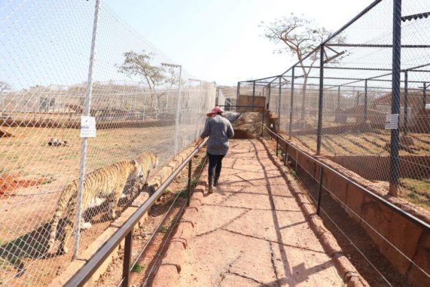 Mpumalanga zoo critics labelled 'privileged' as owners push for education, rehabilitation