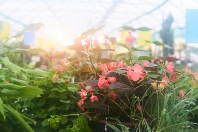 Tips on how to use the shade in your garden this summer