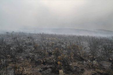PICS: Crowds battle blaze on Mount Kilimanjaro