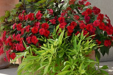Made for each other – impatiens and coleus for the sun