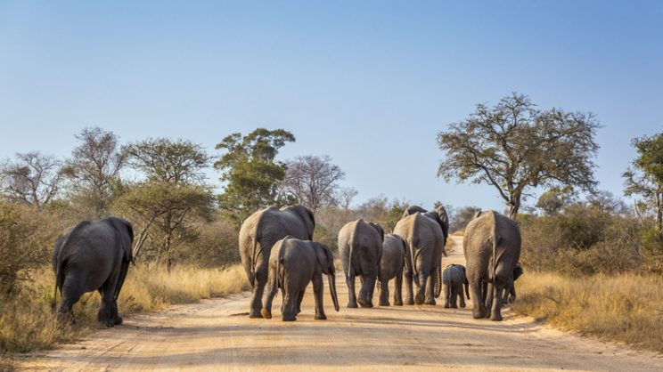 Wild elephants relocated, contracepted and tracked to better understand behaviour