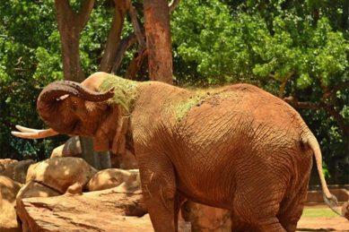 Pretoria Zoo's resident elephant cow Landa dies