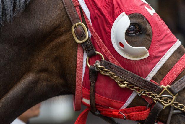 Racing world converging on Meydan as Carnival kicks off
