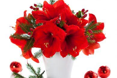 Festive flowers rich in folklore
