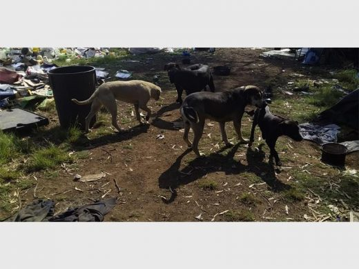 Thokoza woman survives brutal attack by five stray dogs