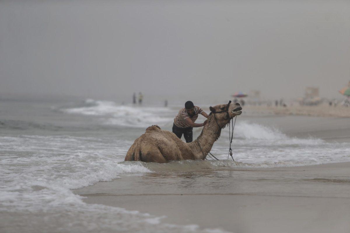 Gaza weather