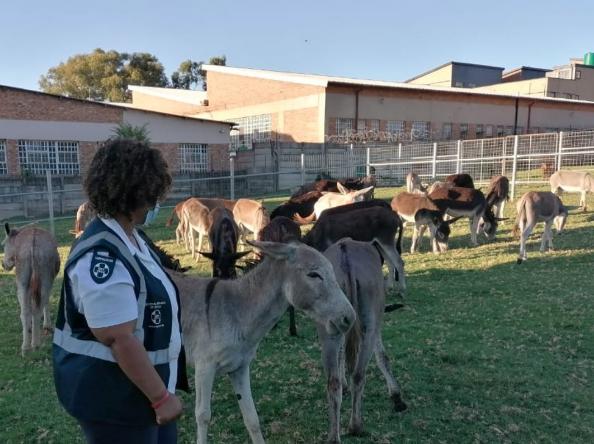 Rescued donkeys