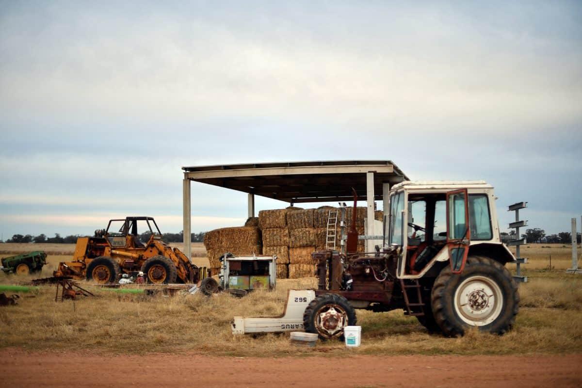 australian farmers mice plague