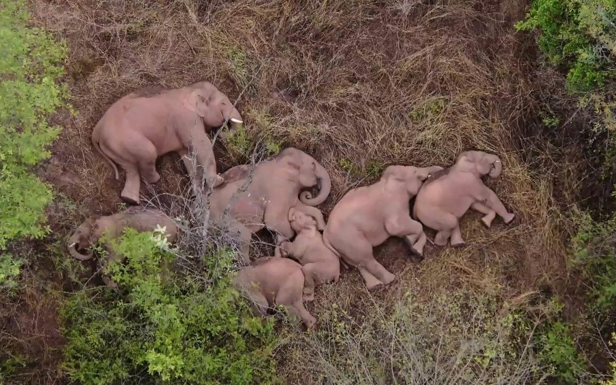 elephants trek trekking china
