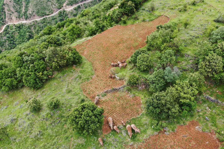 elephants china drones