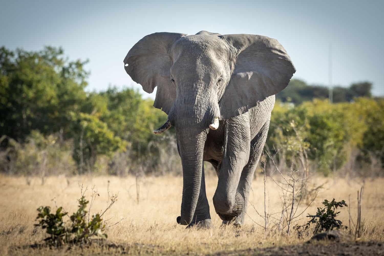 Man dies in Elephant attack